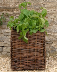 Burgon & Ball Patio Potato Planter