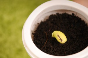 Wiggo Plant with Message